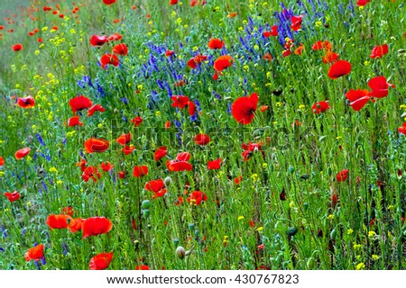 Colorful meadow with a lot of flowers