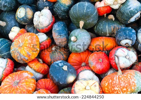 Colorful miniature pumpkins on sale at a local farmer's market for Thanksgiving. Autumn theme background. - stock photo