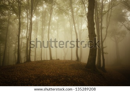 colorful misty forest