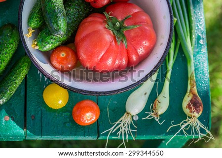 Colorful mix vegetables in garden - stock photo