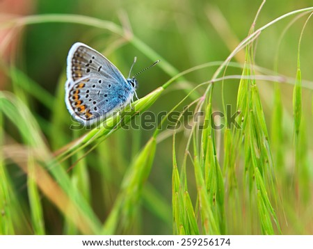 Colorful moth and grass. Season specific. - stock photo