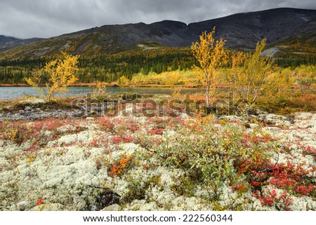 Colorful northern trees, bushes and lichens near Polygonal lake in Hibiny mountains above the Arctic Circle - stock photo
