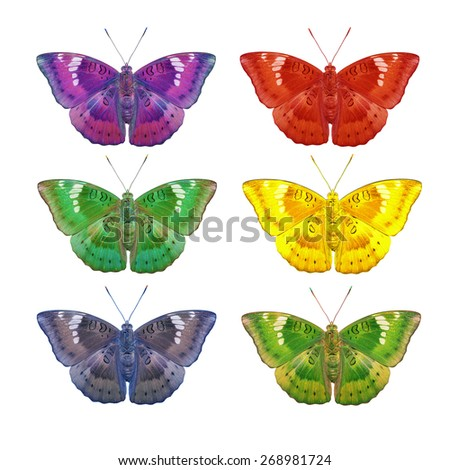 Colorful of male mango baron butterfly on white background with clipping path - stock photo