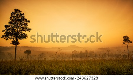 Colorful of Spring Mist, trees are wet, damp fog of forest - stock photo