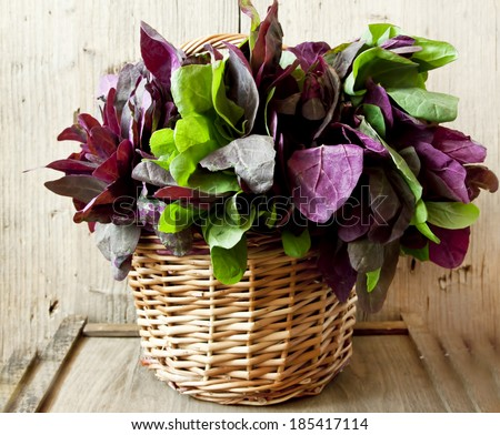 Colorful Orach in the Basket on Wooden Background - stock photo