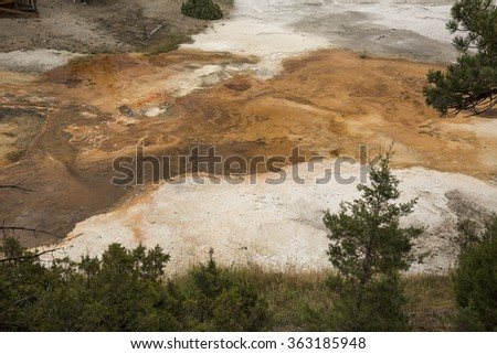 Colorful, orange geothermal streams and pools of hot water with carbonate ridges, bordered by pine trees, overlying the white travertine rock of Mammoth Hot Springs in Yellowstone Park, Wyoming. - stock photo