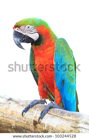 Colorful orange parrot macaw - stock photo