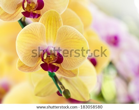 colorful orchid flower on nature