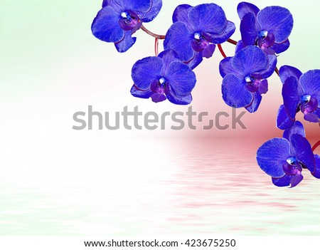 Colorful orchid flowers. Beautiful orchid flowers. Delicate flower - stock photo