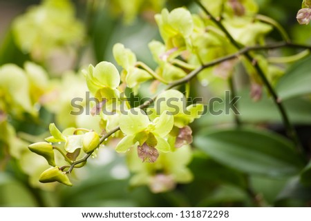 Colorful orchids and ornamental plants in the garden. Refreshing to see the audience. - stock photo