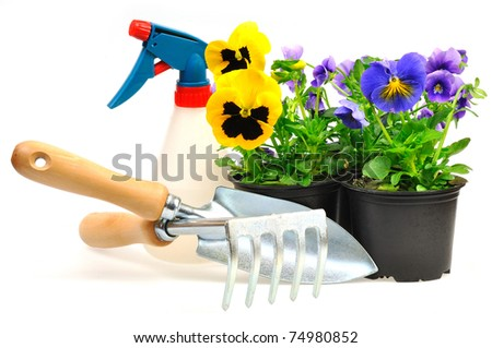 colorful pansies in pots with gardening tools on white background - stock photo