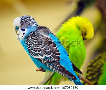Colorful parakeet on tree branch - stock photo