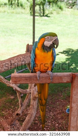 colorful parrot bird in nature background - stock photo