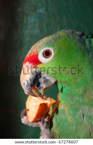 colorful parrot eating in cage
