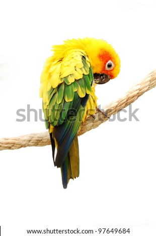 colorful parrot isolated on white close up