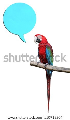 Colorful parrot saying isolated on white background - stock photo
