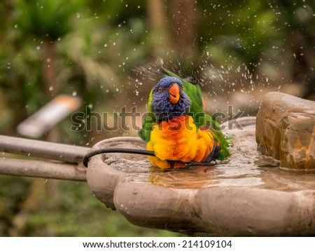 Colorful parrot taking a bath and splashing with water - stock photo