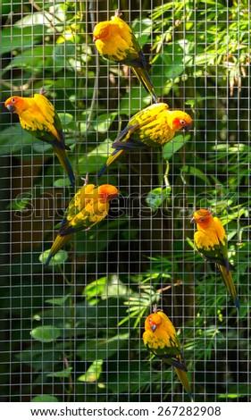 Colorful parrots in safari world, Bangkok Thailand - stock photo