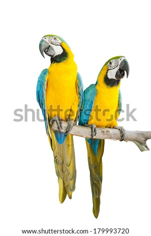 Colorful parrots saying isolated on white background. - stock photo