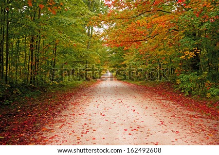 Colorful Pathway in the autumn forest - stock photo