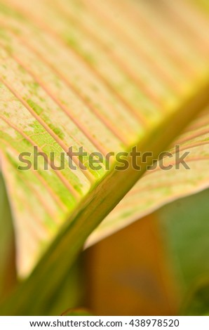 Colorful Pattern of Plumeria leaves.