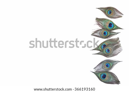 colorful peacock feathers on white background. - stock photo