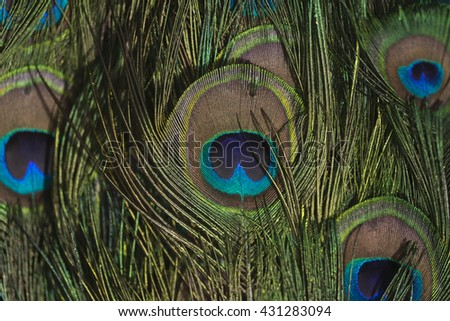 Colorful peacock feathers texture - stock photo