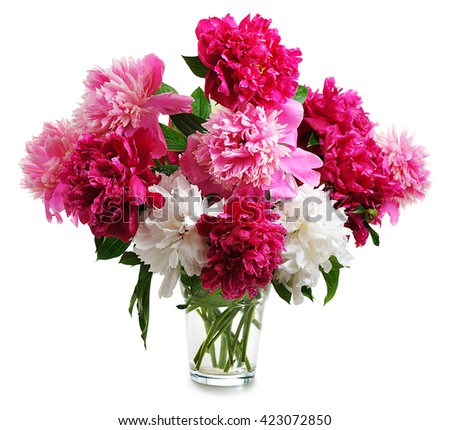 colorful peonies isolated on white background - stock photo