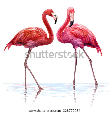 Colorful pink flamingo. Realistic illustration. Blue Lagoon. - stock photo