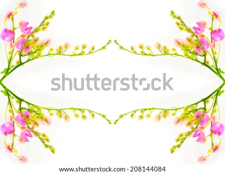 Colorful pink flower, Coral Vine (Antigonon leptopus) isolated on over white background