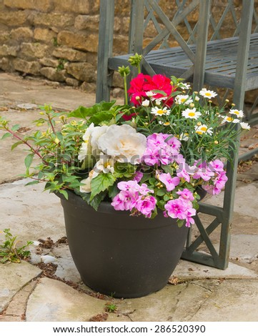 Colorful plants in a  pot, including begonia, petunia, fuchsia, impatiens