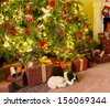 Colorful presents and a dog under the christmas tree - stock photo