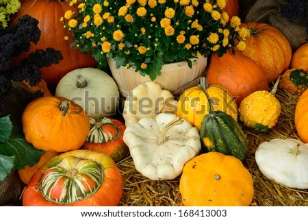 colorful pumpkin and squash in the harvest season