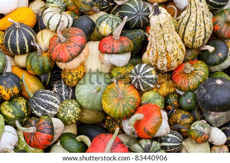 Colorful pumpkins assortment on the market - stock photo