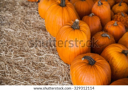 Colorful pumpkins collection on the autumn market. Background for fall, autumn, Halloween, Thanksgiving, seasonal display. A pile of pumpkins