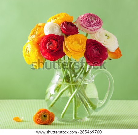 colorful ranunculus flowers in vase over green background - stock photo