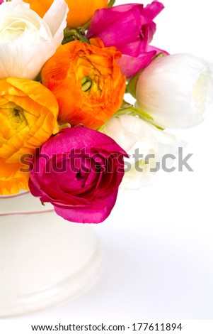 colorful ranunculus flowers isolated on white
