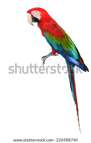 Colorful Red-and-green Macaw bird isolated on white background (green-winged macaw) - stock photo