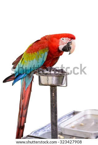 Colorful Red-and-green Macaw bird isolated on white background with clipping path - stock photo