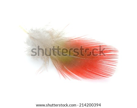 Colorful Red feather Scarlet Macaw on a white background