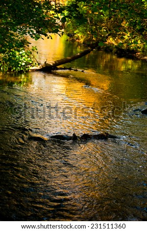 Colorful river surface with abstract reflection - stock photo