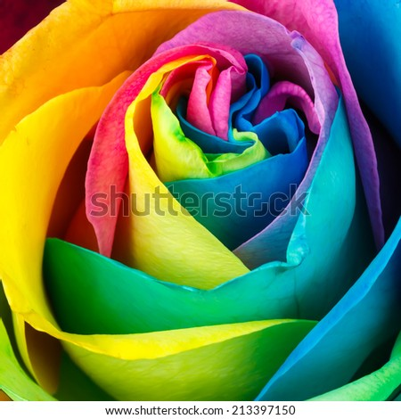 Colorful rose flower background - stock photo