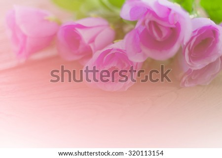 colorful rose flower soft focus and pool light in color tone pastel bright.background. - stock photo