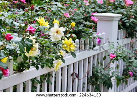 Colorful Rose Garden - stock photo