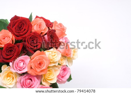 Colorful rose on a white background - stock photo