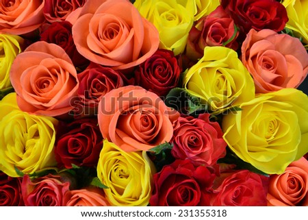 Colorful roses background, shallow depth of field - stock photo