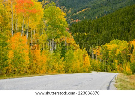 colorful rural highway along an aspen forest in colorado in autumn - stock photo