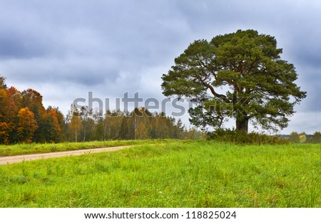 Colorful rural landscape with lonely pine and autumnal forest