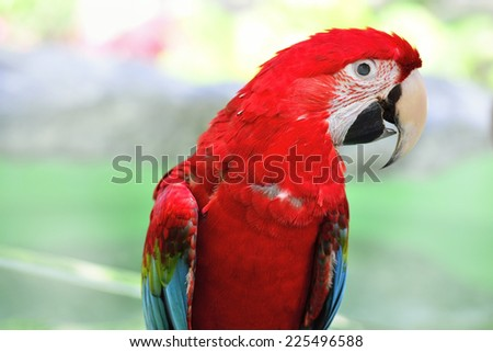 Colorful Scarlet Macaw aviary