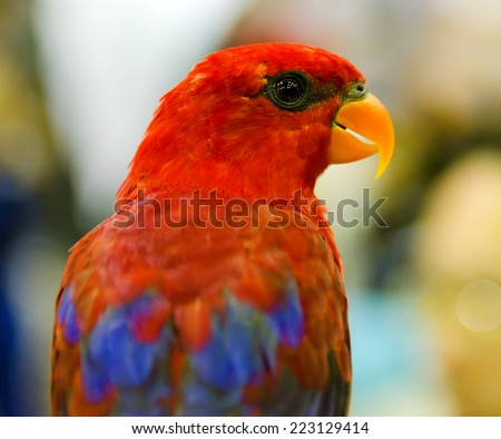 colorful Scarlet Macaw parrot  - stock photo